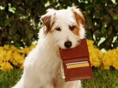 0113_dog-wallet-card_240x180