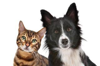 Bigstock-Dog-And-Cat-34744106