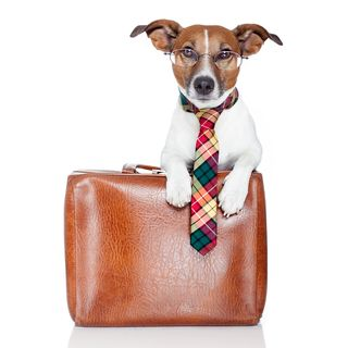 Bigstock-Dog-With-Leather-Bag-33478451