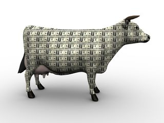 Bigstock-Cash-Cow-4500042