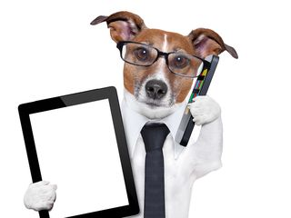 Bigstock-Business-Dog-46176493