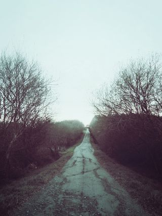 2015-06-Life-of-Pix-free-stock-photos-road-trees-winter-santalla