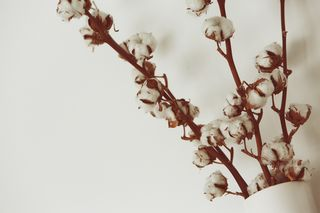 2015-04-Life-of-Pix-free-stock-photos-cotton-flowers-white-vase-leeroy
