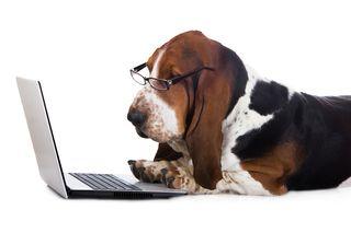 Bigstock-dog-working-on-a-computer-79153348