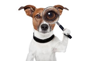 Bigstock-Searching-Dog-With-Magnifying--33492548