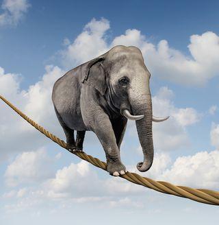 Bigstock-elephant