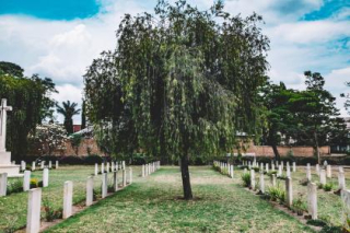 Tombstone tree