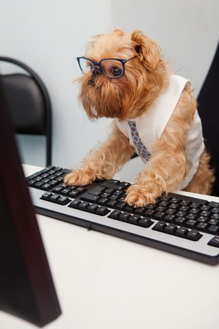 Bigstock-Dog-Manager-35936323