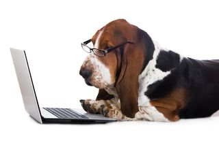Bigstock-dog-working-on-a-computer-79153348