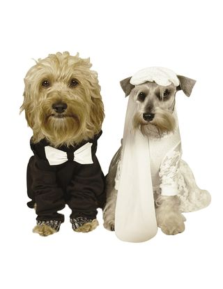 Bigstock-Dog-Wedding-1900036