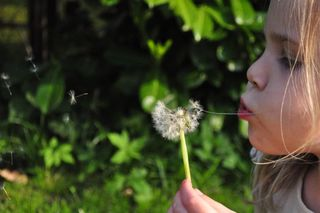 Blowing-child-dandelion-790-526x350