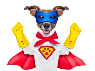 Bigstock-Super-Hero-Dog-50505656