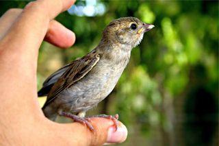 Bird thumb