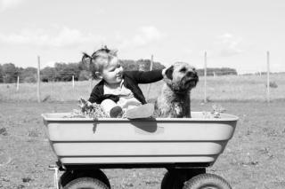 Boy dog pexels-photo-48672-medium