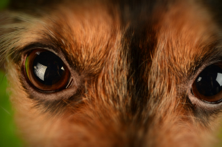 Dog eyespexels-photo-67689