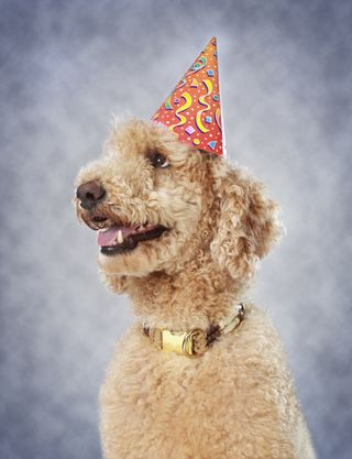 Bigstock-Dog-Wearing-Party-Hat-45120133