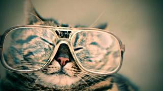 Cat glasses FHTED9EQ3B