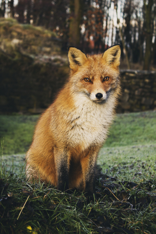 Fox photo-1462953491269-9aff00919695