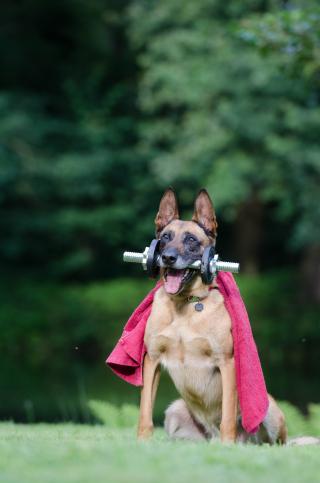 Trick-dog-trick-malinois-dog-show-trick-37735