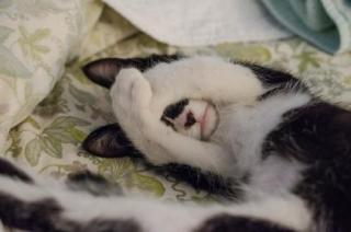 Cat hiding face