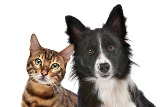 Bigstock-Dog-And-Cat-34744106