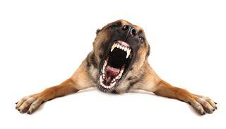 Bigstock-Bad-Dog-38492881