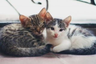 Kitten snuggle