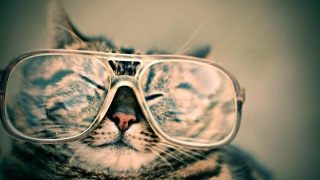 Cat glasses FHTED9EQ3B