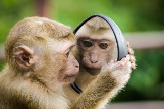 Primate mirror pexels-photo-1207875