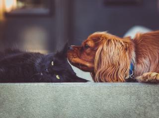 Black cat dogphoto-1471850944644-39b8691134d5
