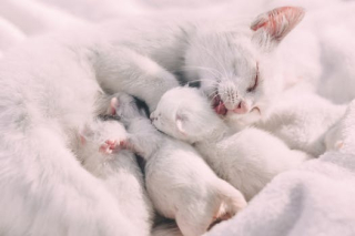 Kittens pexels-photo-412463