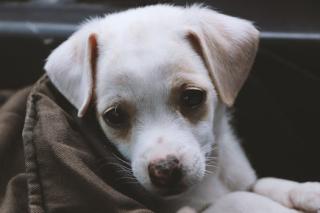 Puppy adorable pexels-photo-1203705