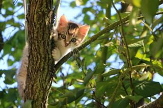 Kitten tree pexels-photo-257532