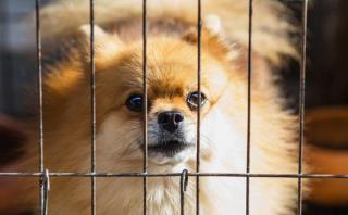 Dog cage pexels-photo-672004
