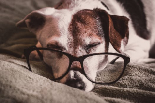 Dog glasses pexels-photo-1009922